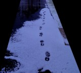 ART_First Snow-FA15